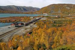 Tidlegare var det furuskog rundt Haugastøl stasjon