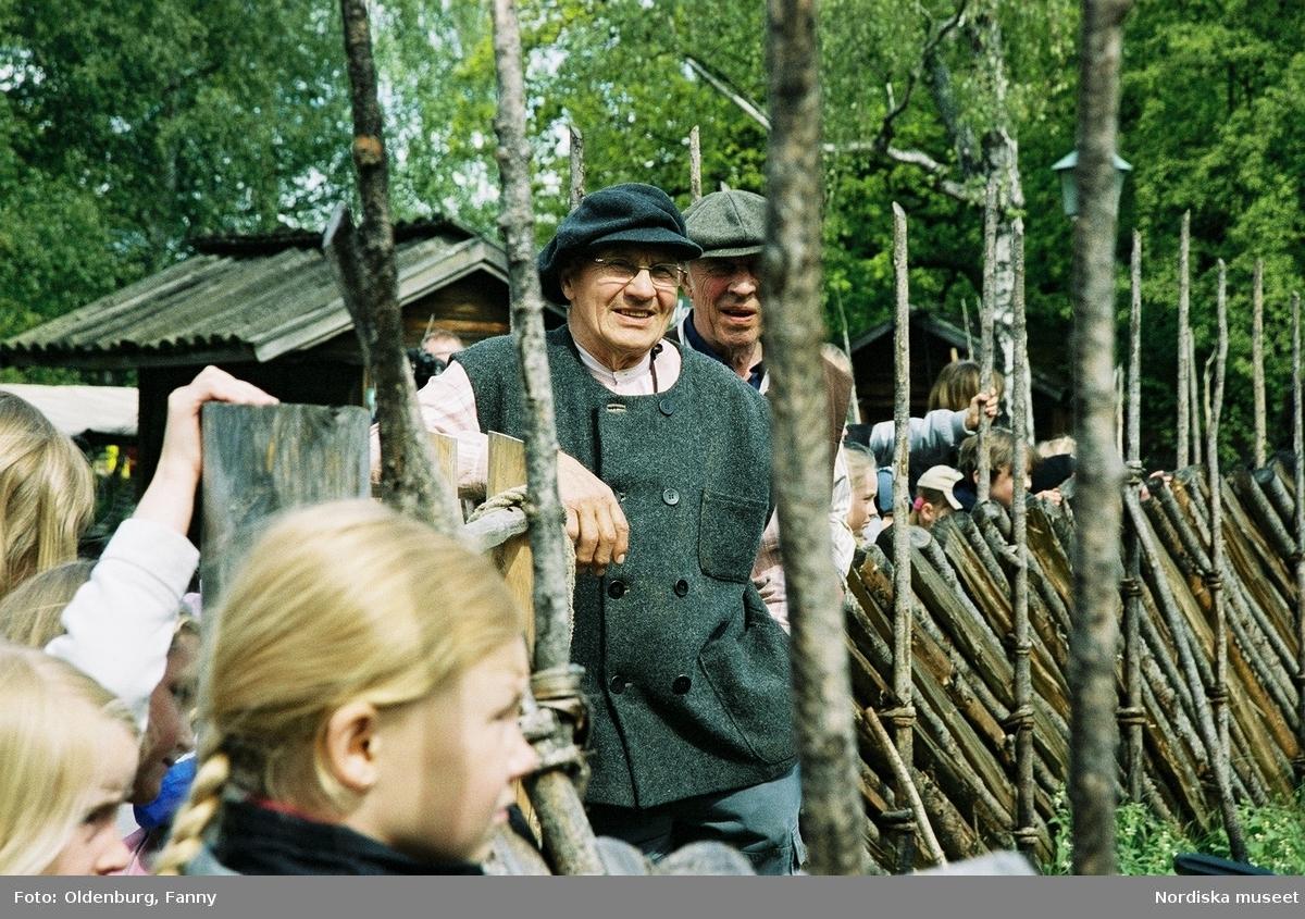 Dragoxarna Lasse och Bosse från Frödinge hembygdsförening visas upp på Skansen.