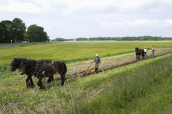 Jordbrukets dag på Julita gård. Jordbruksarbete med häst på
