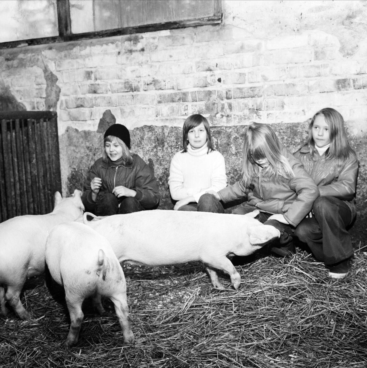 """""""Livet på landet, Tierpsgård lockar ungdom"""", Tierp, Uppland februari 1973"""