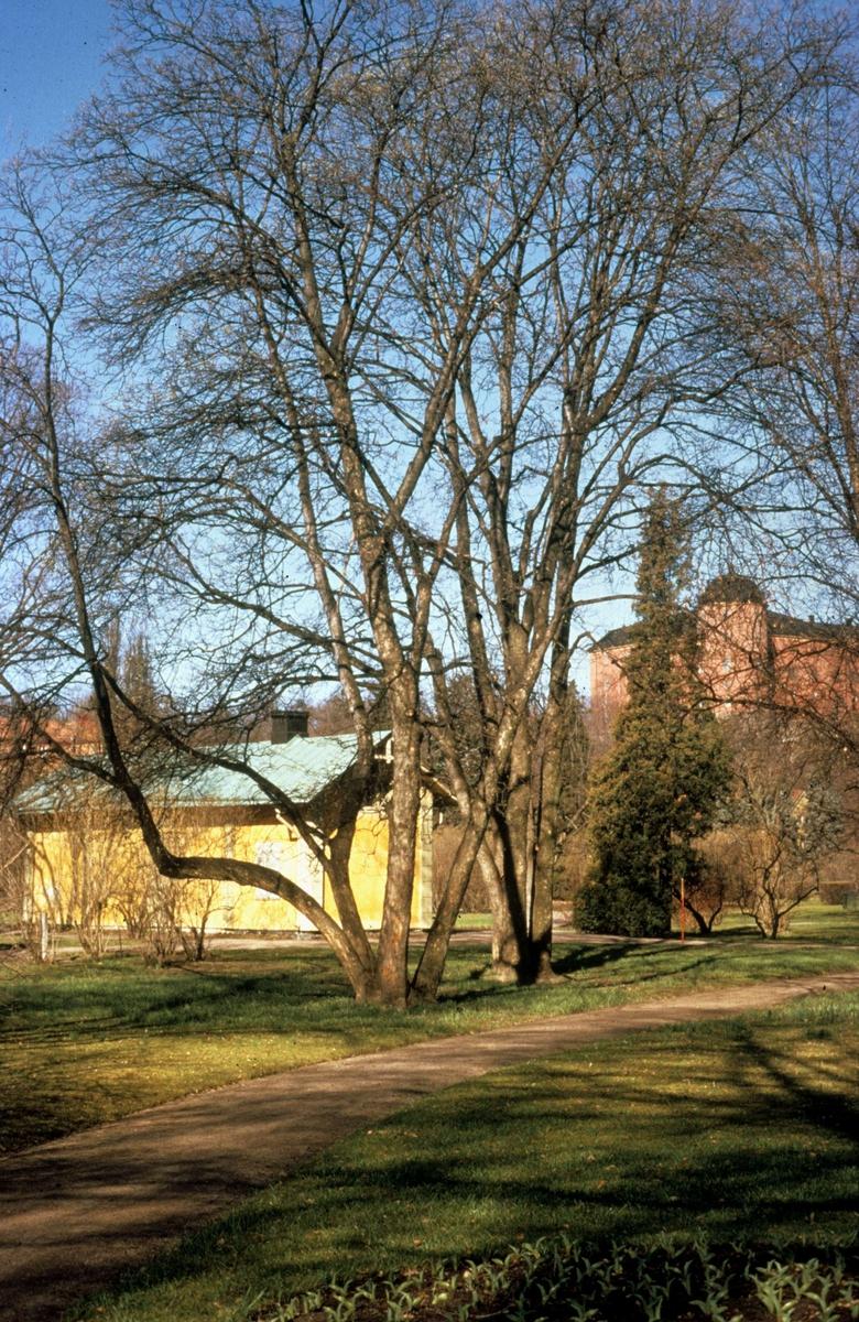 Stadsträdgården, Uppsala 1975