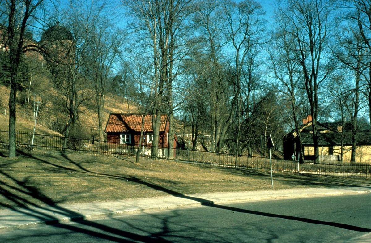 Bleke backe i Slottsbacken, Uppsala 1981