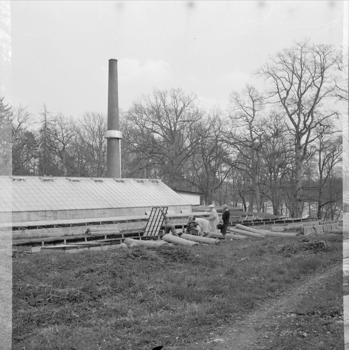 Besök i växthus vid Wiks slott, Vik, Balingsta socken, Uppland 1965