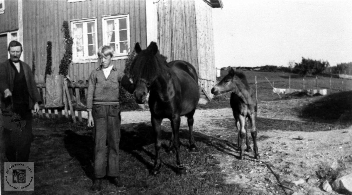 Ånen Bruskeland og Karl Steinsland med hest og føll på Bruskeland i Laudal.