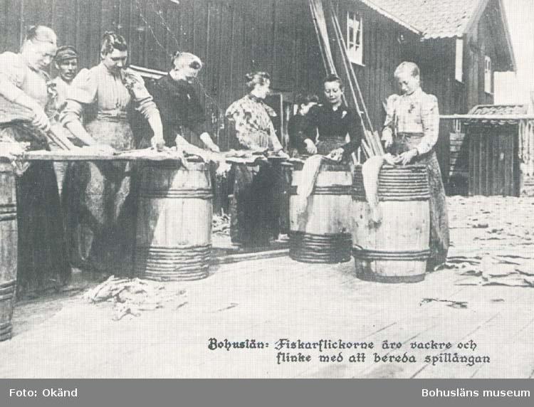 """Tryckt text på kortet: """"Bohuslän= Fiskarflickorna äro vackra och flinka med att bereda spillångan."""" """"Reproduktion av foto tillhörande Göteborgs historiska Museum."""" """"Carla - förlaget, Lysekil Tel. 0523/10919."""""""