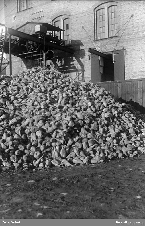 Sockerbetor levererade till ett sockerbruk i södra Sverige