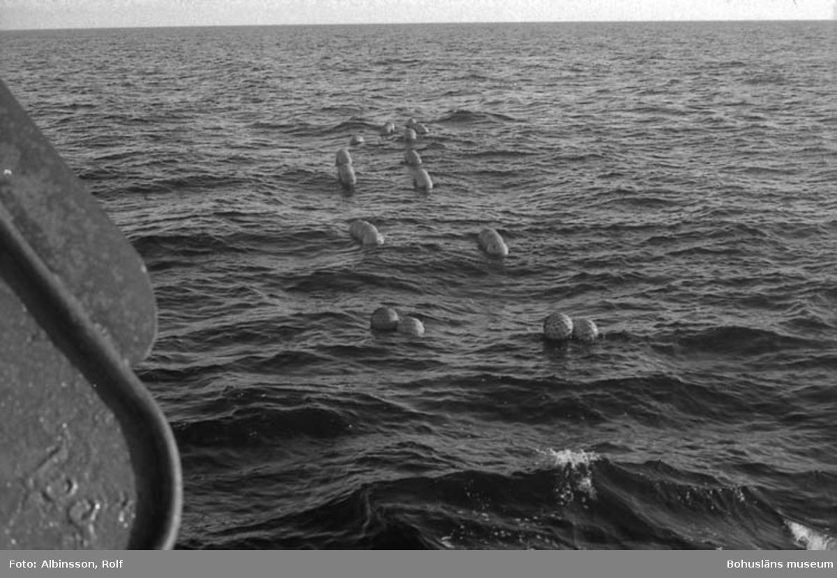 """Enligt fotografens noteringar: """"Här ser vi trålkulorna, det tar längre tid att få in det hela eftersom vi trålat på 120 famn.""""  Fototid: 1996-03-07."""