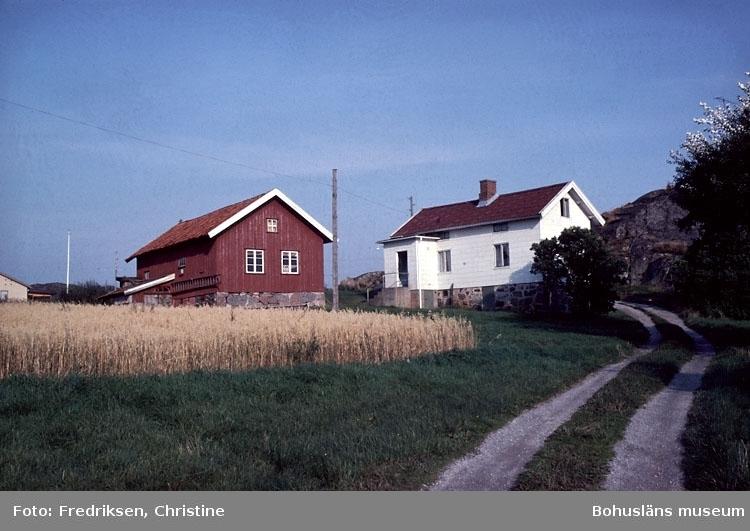 """Motivbeskrivning: """"Båtbyggare Johan Olsson, Brevik, Lyrön. Bostadshus och båtbyggarverkstad (fotograf: Christine Fredriksen)."""" Datum: 1980-09-08."""