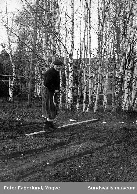 Arbete i trädgården, Förmansbostad 2, Ljungaverk.