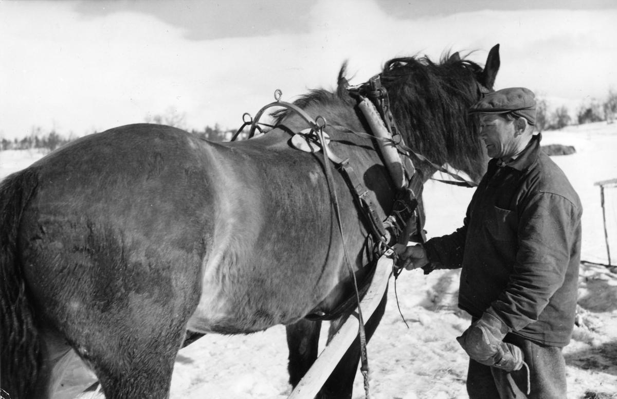 Lantbrevbärare Per Andersson på linjen Långudden-Västerfjäll (45,5 km) med den äldre av sina två hästar.