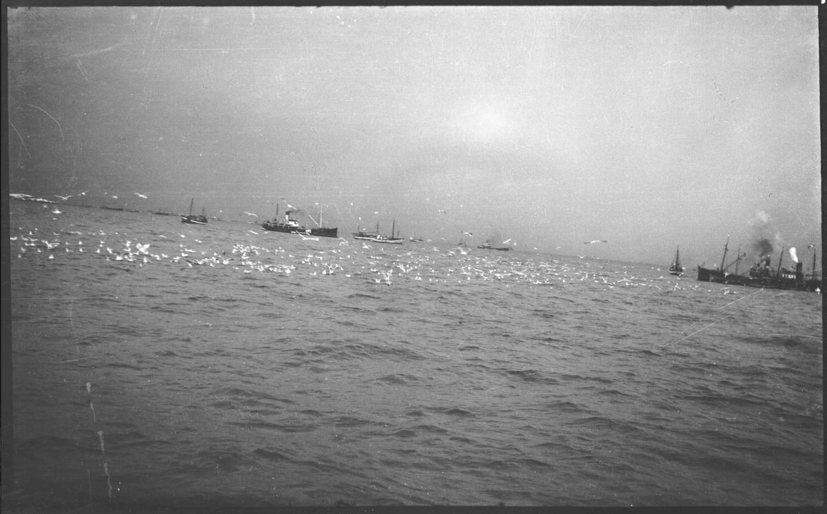 Vintersildfiske, sildeflåten