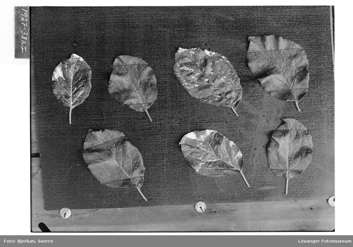 Blader på kartong I