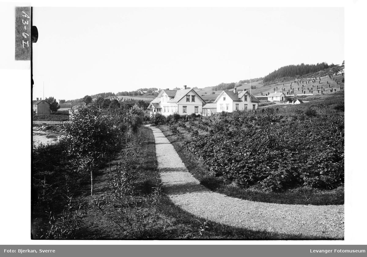 Innkjørsel mot Hylla Havebrugsskole, med plantefelt og frukthage i forgrunnen.