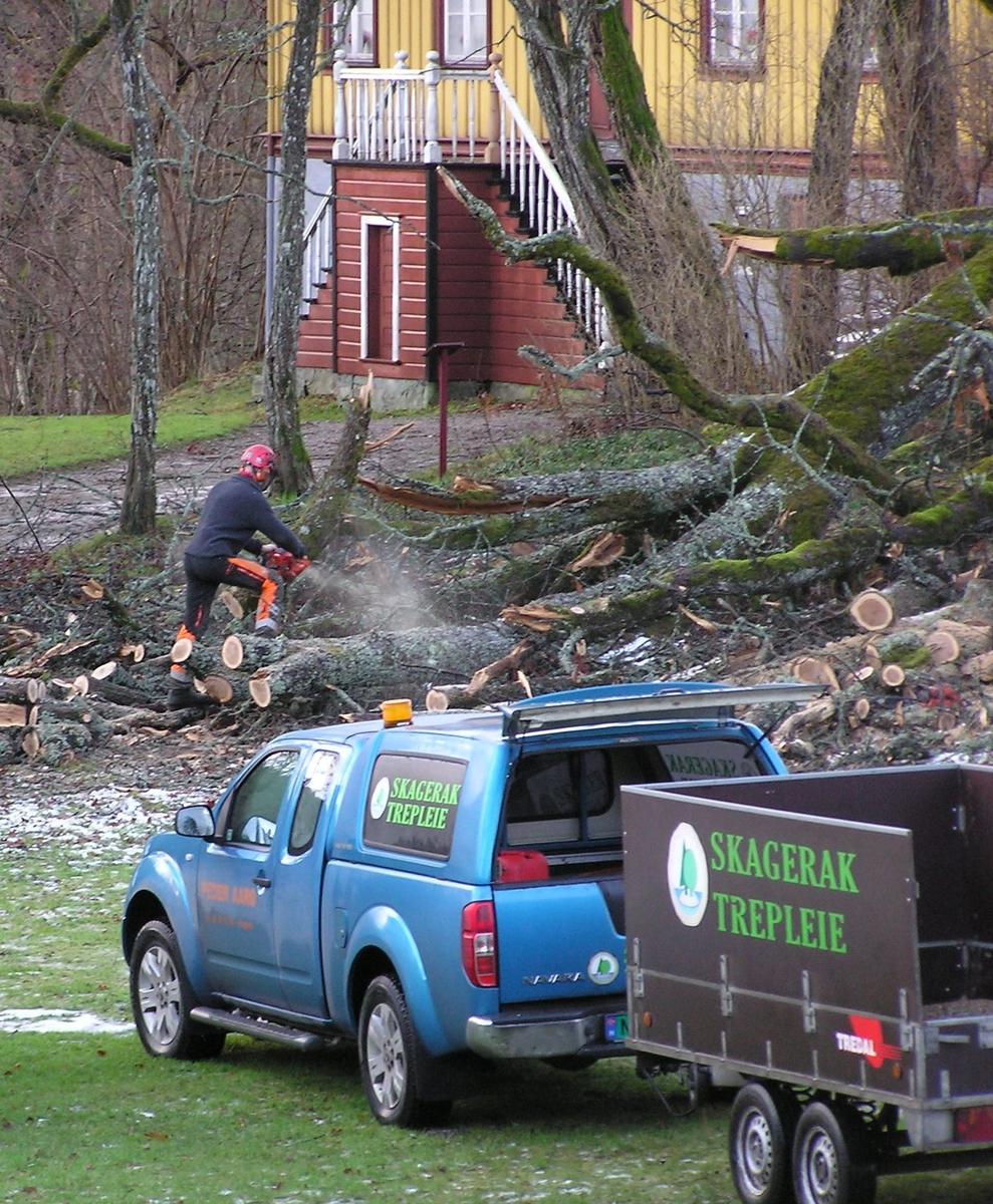 Jostein Aarø med flere kom og kappet opp eika. 06.12.2011