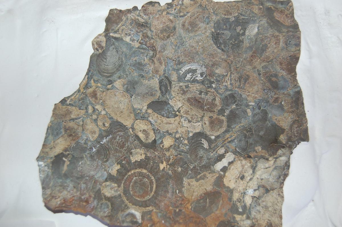 Små steinheller montert på en plate, støypt fast i gips.