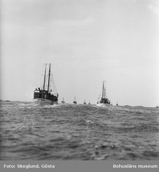 Sillfiskare utanför Åstol 1954