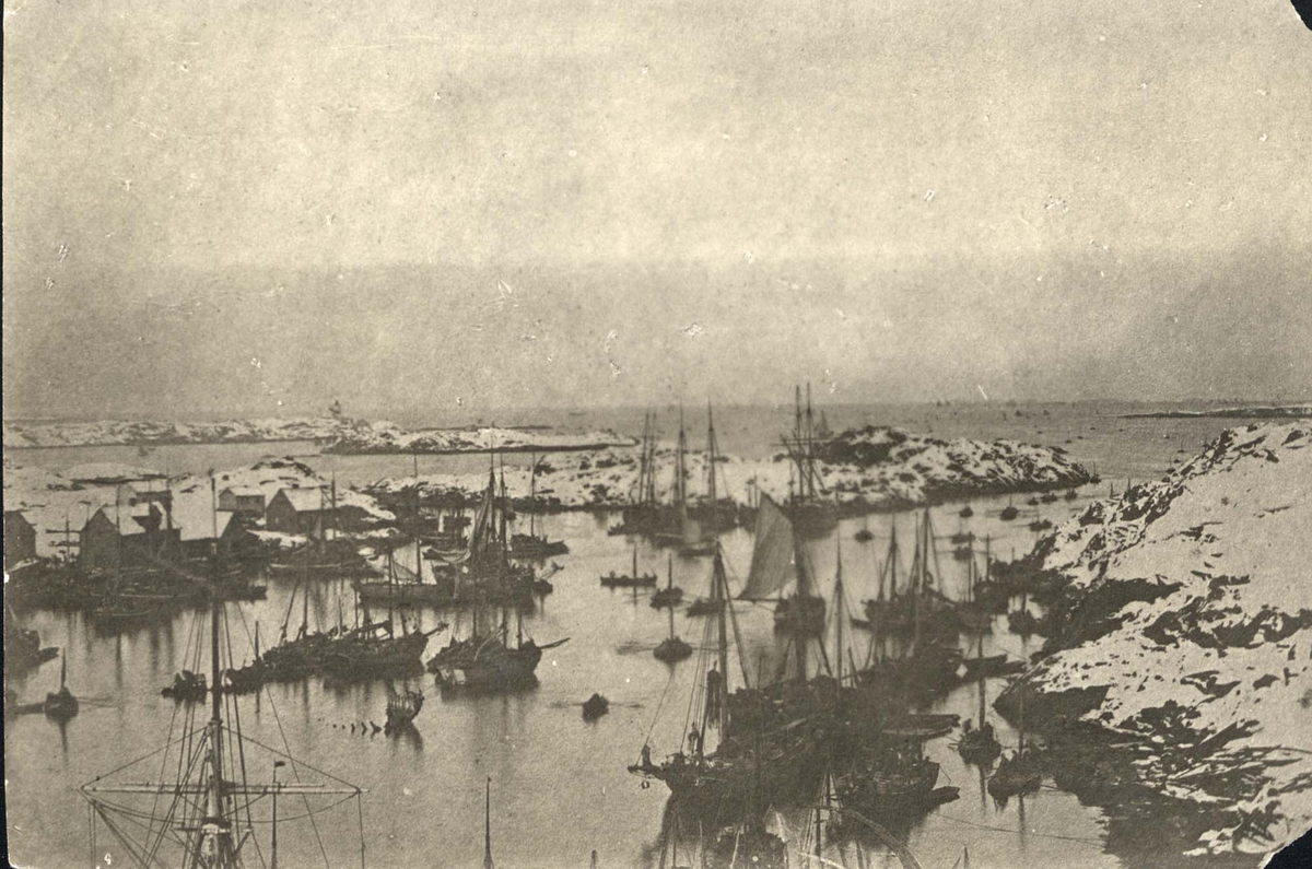Båter - Skip - Seil - Sildefiske.