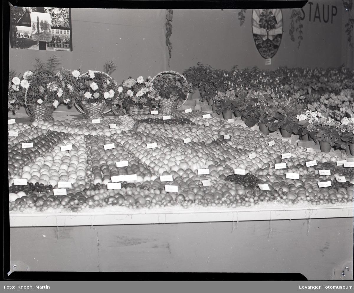 Utstilling av blomster og frukt  ved Staup  II