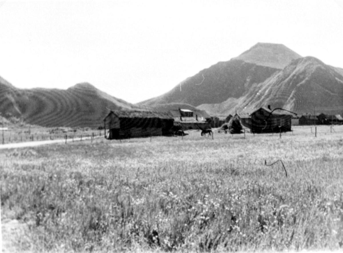 Jordbruk. Gård med flere bygninger.