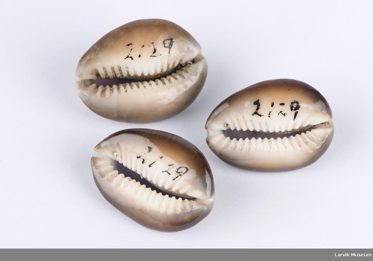 Konkylier, 3 stk. Form: Eggformet