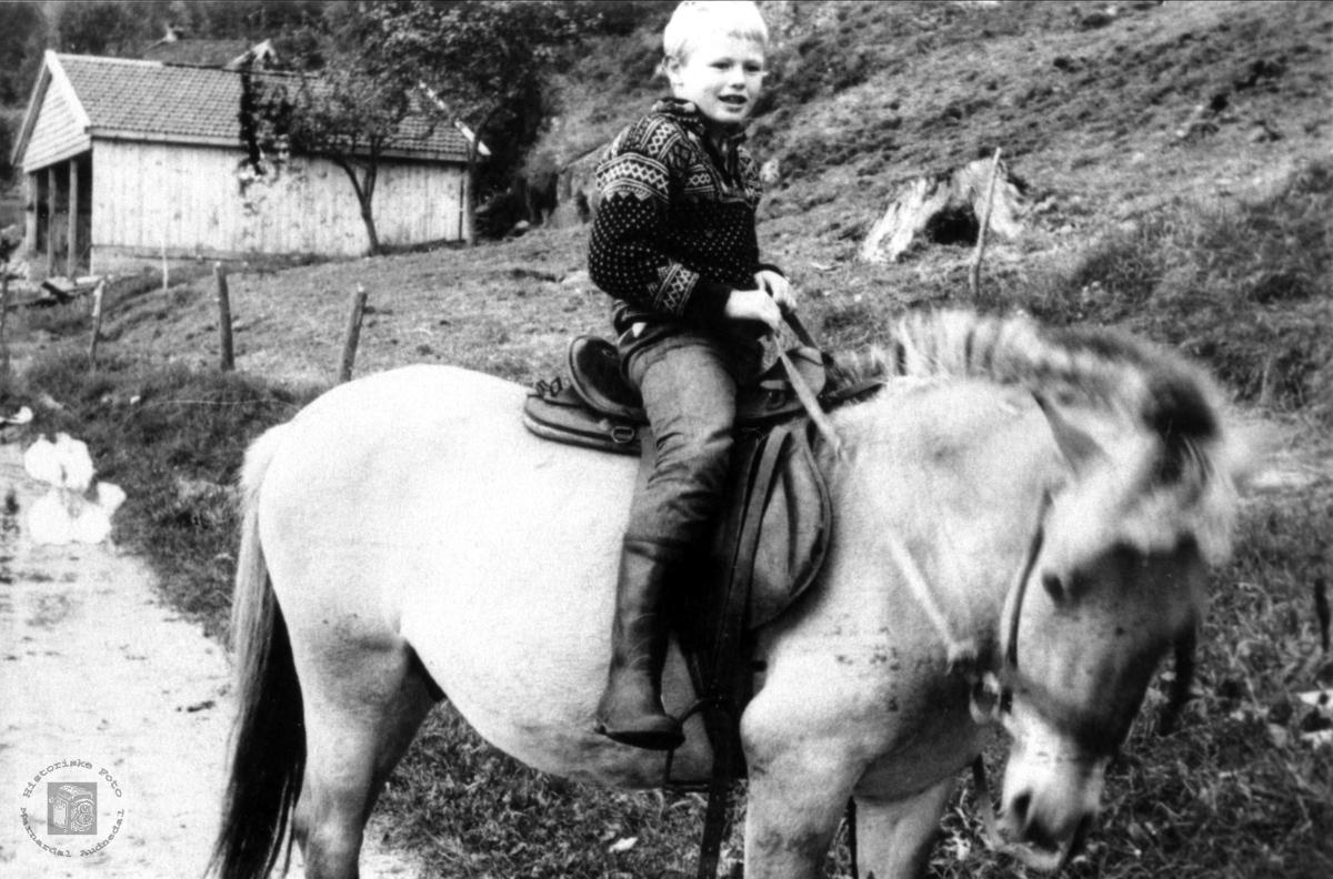 På hesteryggen. Svein Egil Torgersen.