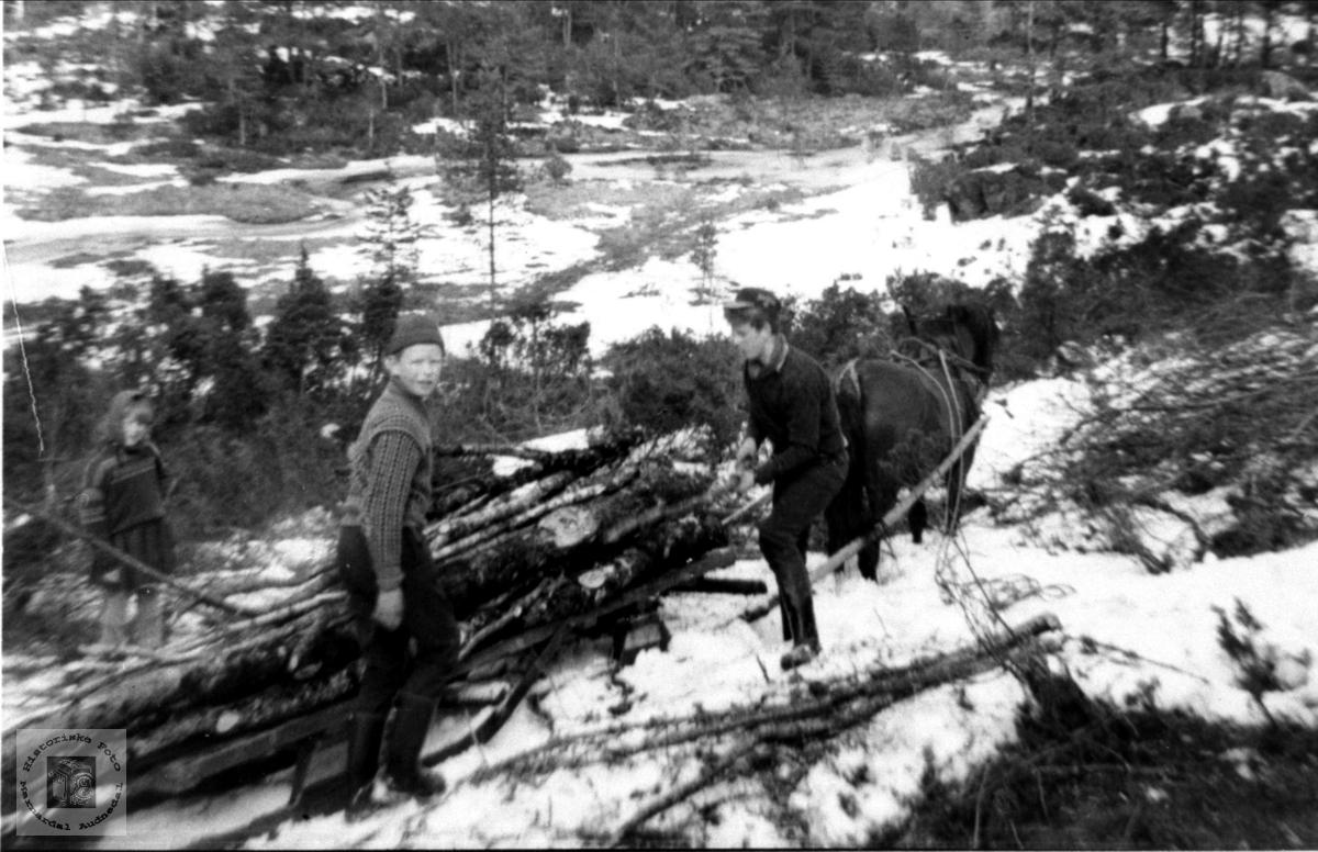 Skogskjøring i Hesteheia, Grimestad