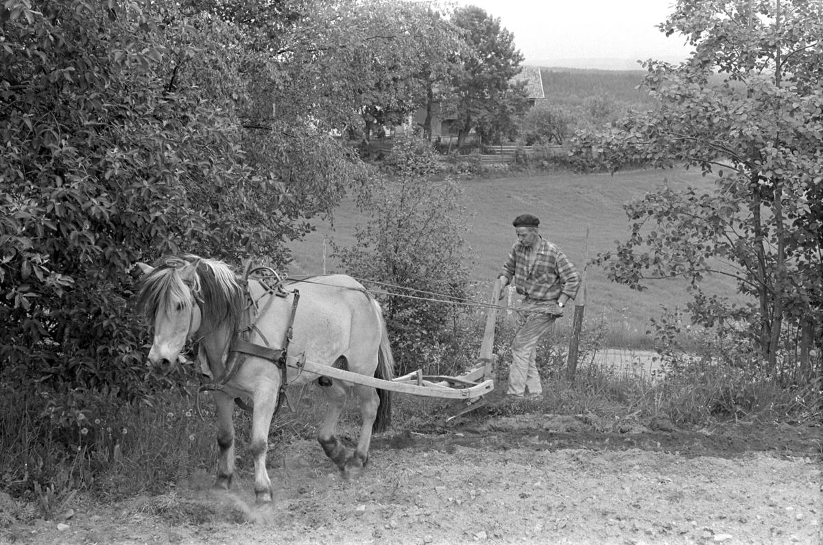"""Røsbak, store, Furnes. Gnr.781, bnr.1. Mikael E. Røsbak f. 1918. Hest, hesteredskap, ard.  """"Ard og hest snus i enden av åkeren. Ved å løfte opp arden trengte man liten plass å snu på. På den måten kunne hele åkerarealet utnyttes."""""""