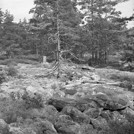 Hogdals socken. Sundby 2:2. Ovalformad vall med resta stenar.