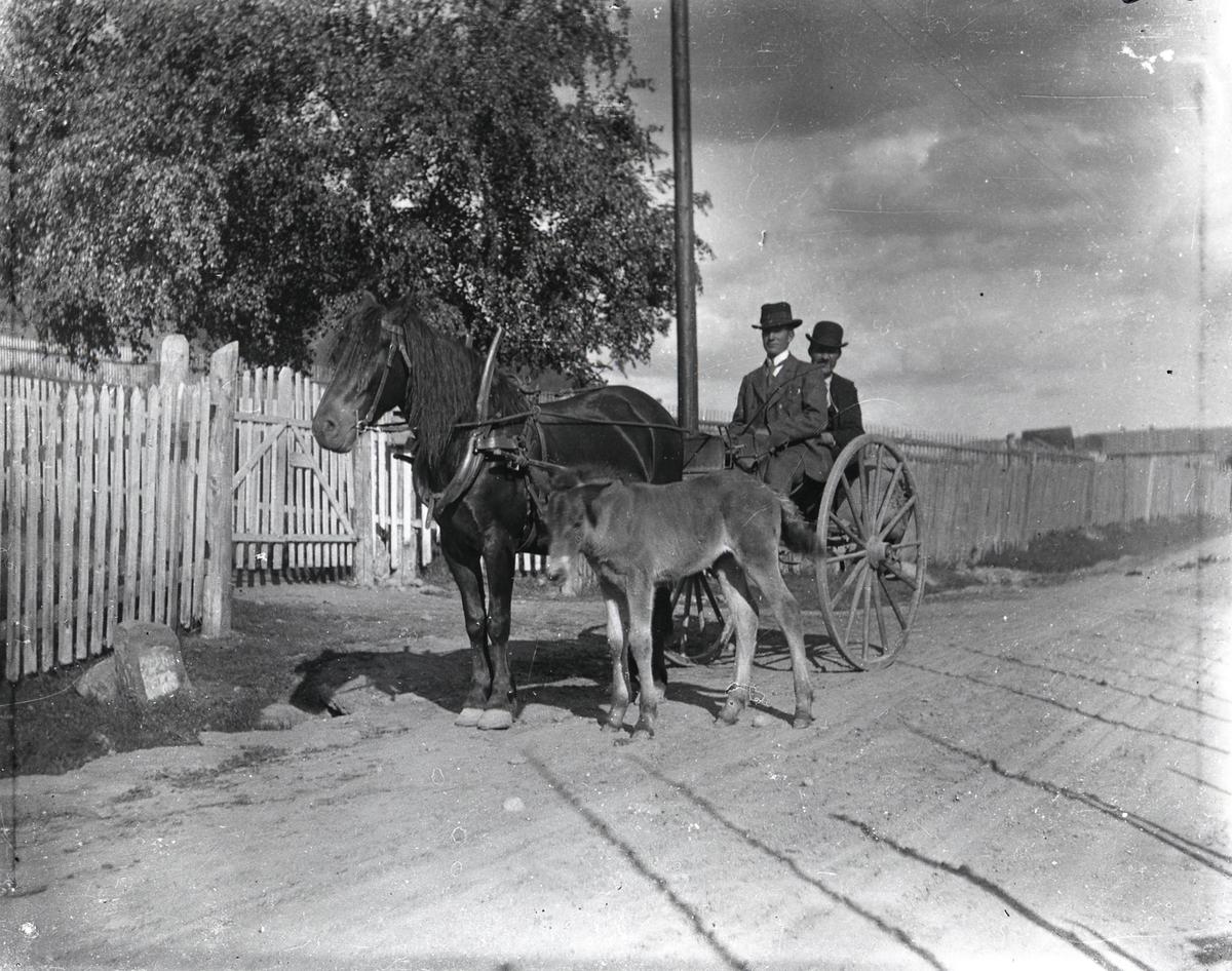 Hest og vogn.  Føllet går ved siden av. 2 menn i finstas sitter i vogna.