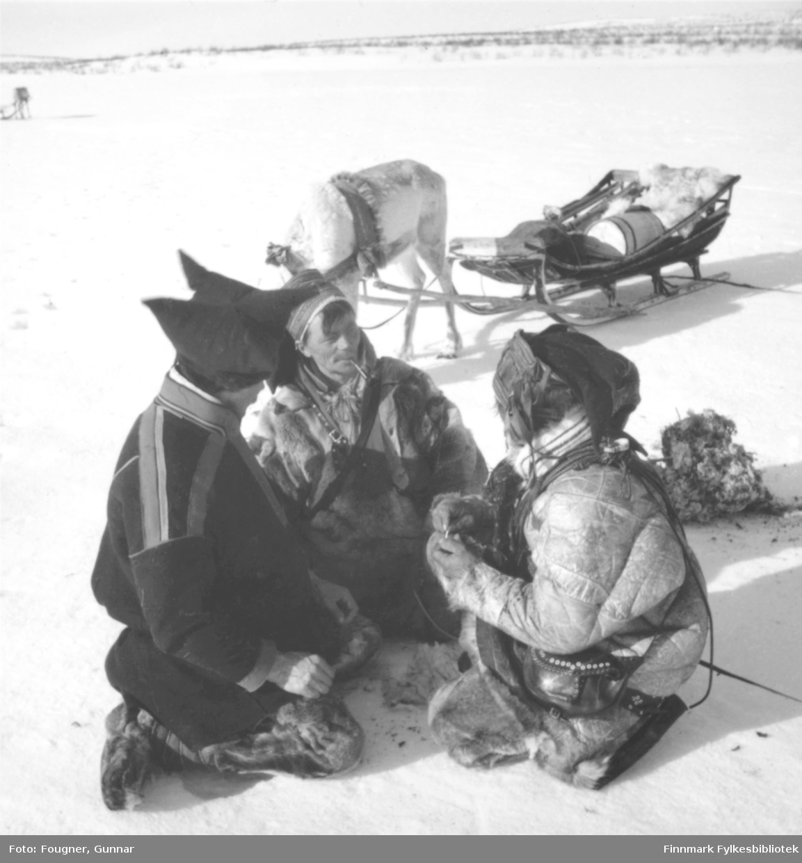 Iver Mikkelsen Sara, Josef Josefsen Buljo og en ukjennt same tar seg en rast på vidda.  En rein med slede står i bakgrunnen. Se også bilde FB 93189-016.