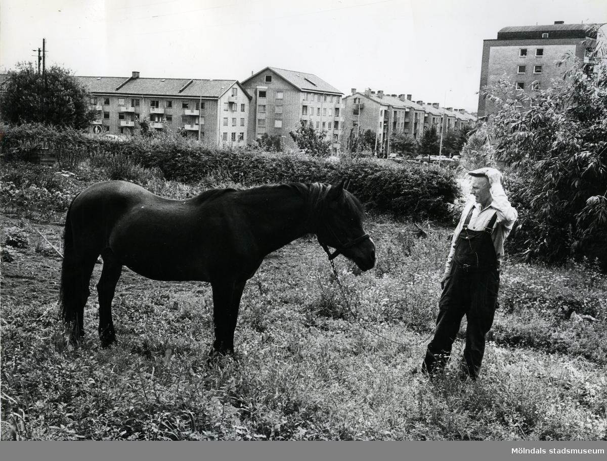 Sten Svanfeldt & hästen Sylvester. Trädgårdsmästeriet på Wallinsgatan. Sylvester sägs vara Sveriges äldsta häst, ca 38 år. För mer information om bilden se under tilläggsinformation.  Blandade bilder inslamlade i samband med dokumentation av Åby Stallbacke och Stallgårdarna 2015.
