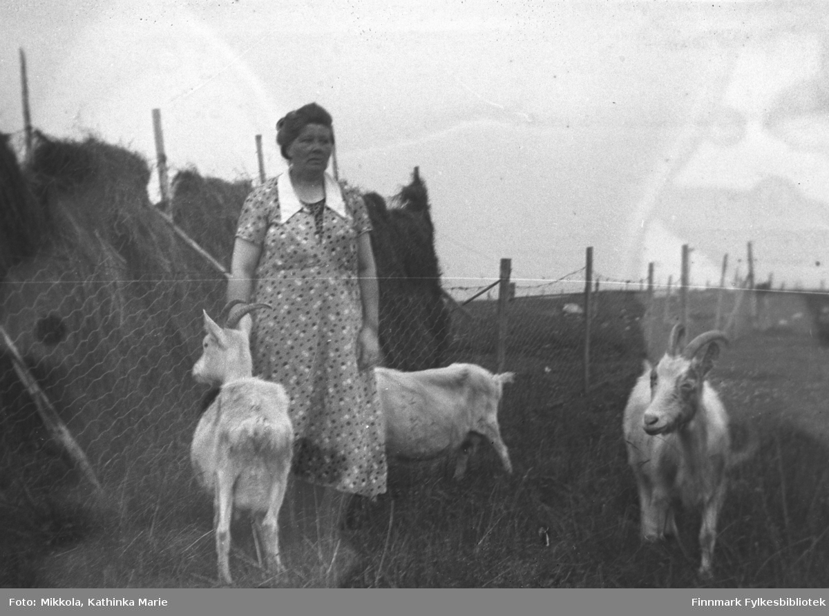 Dette er sannsynligvis  Anna Serine Matinaho, født 28.07.1900 i Vadsø. Anna er fotografert stående foran ei hesje (høytørk) og rundt henne står tre geiter. Det er høysommer og bildet er antatt å være fra Vadsø.