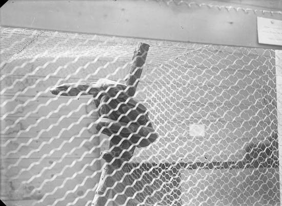 Orm bakom glas och galler på utställning i Uddevalla 1928
