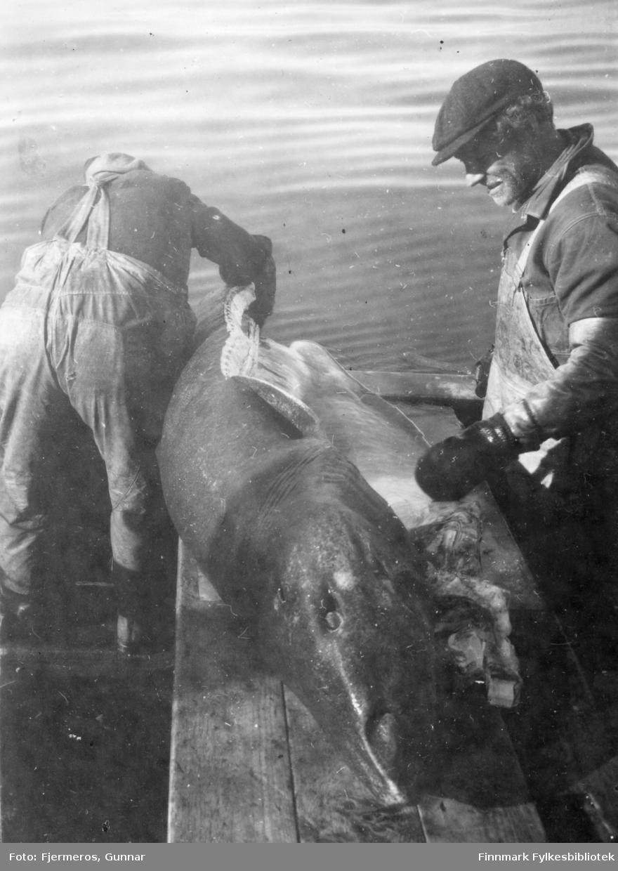 """Sløying/slakting av Håkjerringa er i gang av noen av mannskapet på båten """"Varfjell"""". Mennene er ukjente."""
