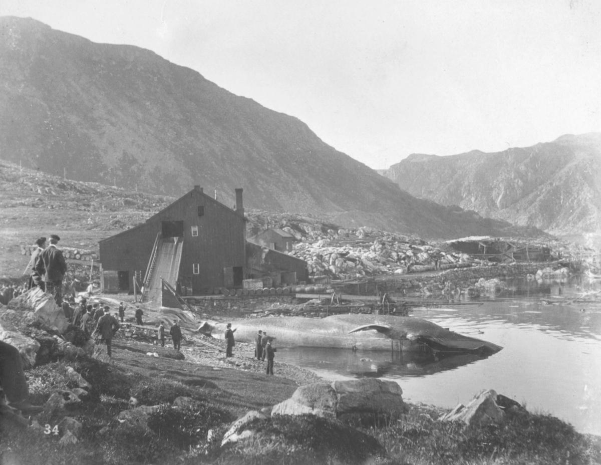 """""""Ingebrigtsens hvalfangerstation. Rolfsø."""" Eid av Morten A. Ingebrigtsen."""