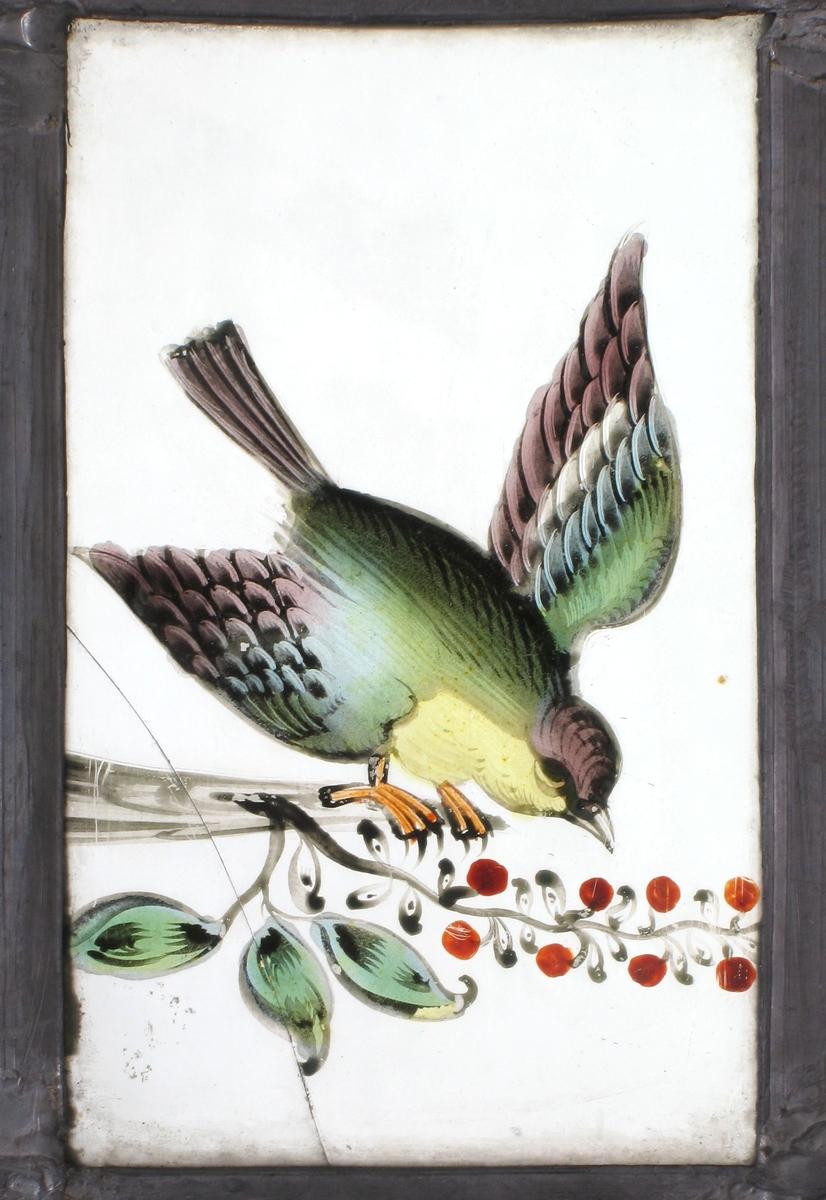 Liten fugl  i grønt, gult, rosa og sort på en gren med kirsebær.