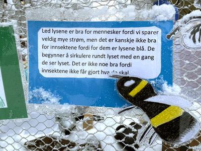 «Led-lysgruppa har skrevet om led-lysets innvirkning på insekter og tegnet insektene som f.eks flue, marihøne og mygg.» (Foto/Photo)