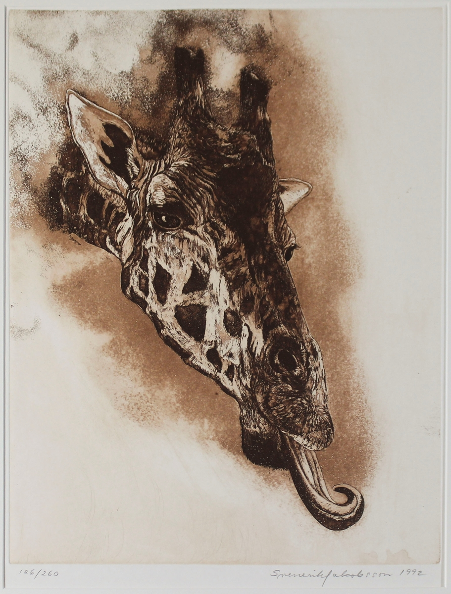 Bilden föreställer ett giraffhuvud med tungan utsträckt.