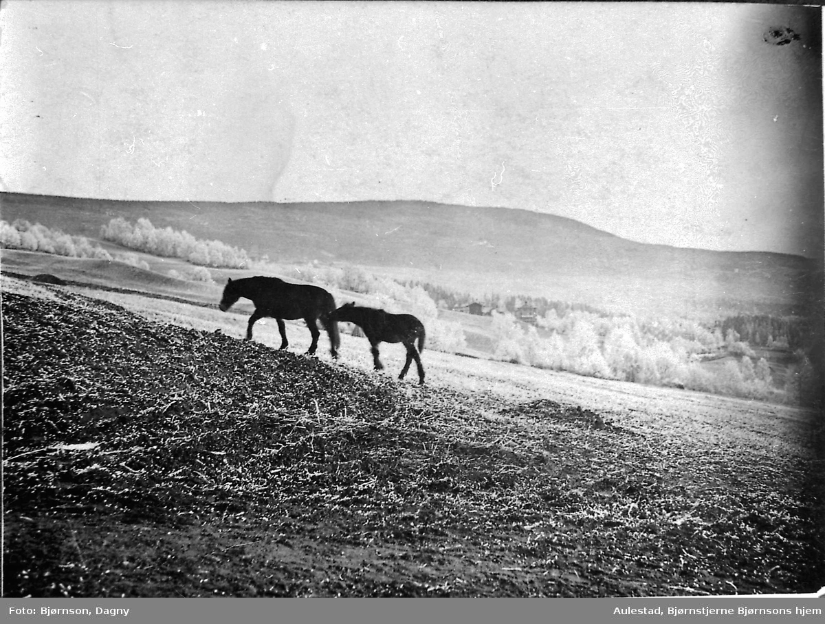 Landskap, hest, postkort,