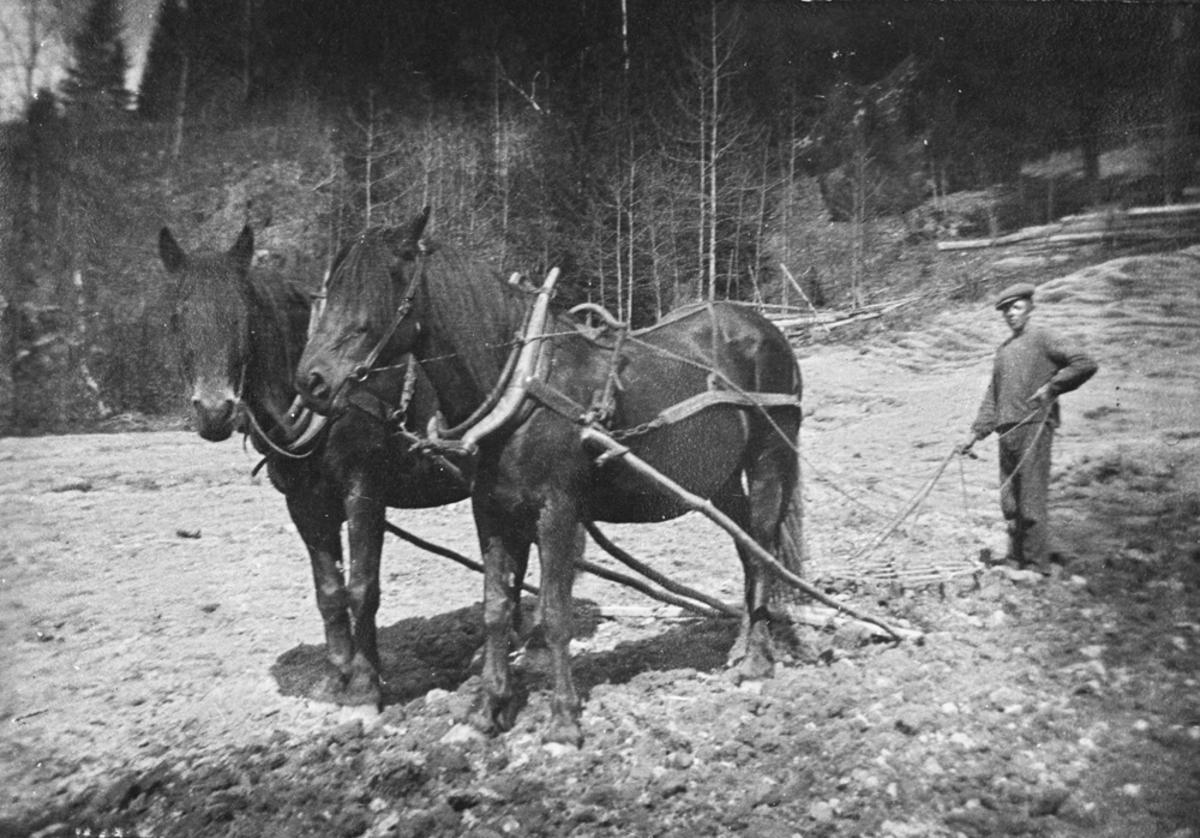 Pløying m/to hester.