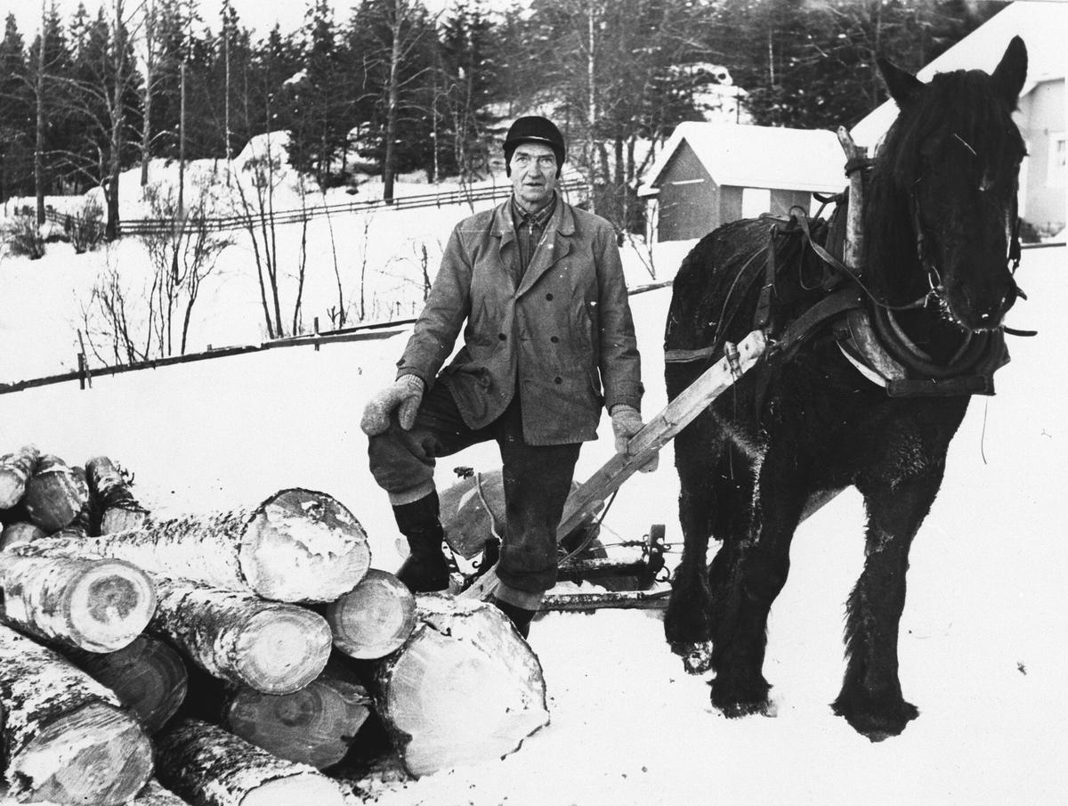 Tømmerkjøring med hest.