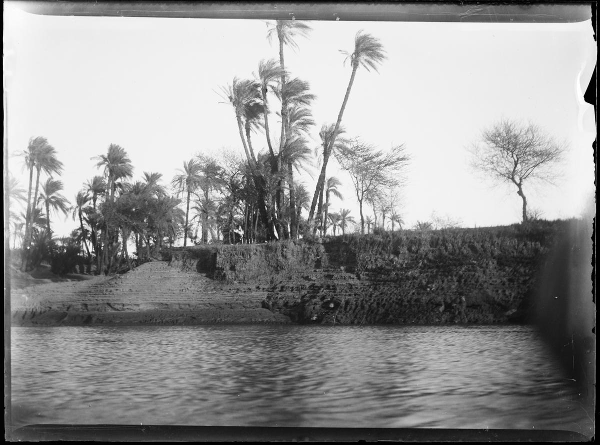 """""""Elefantin"""" (Bildetekst fra album). Utsiktsbilde av palmer og elv."""