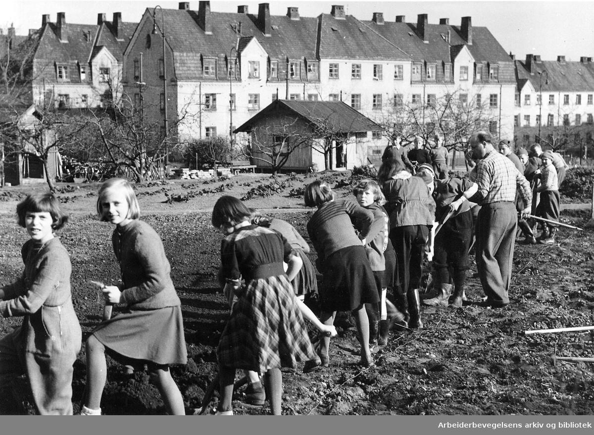 Skolehagen på Geitmyra,.ca. 1950