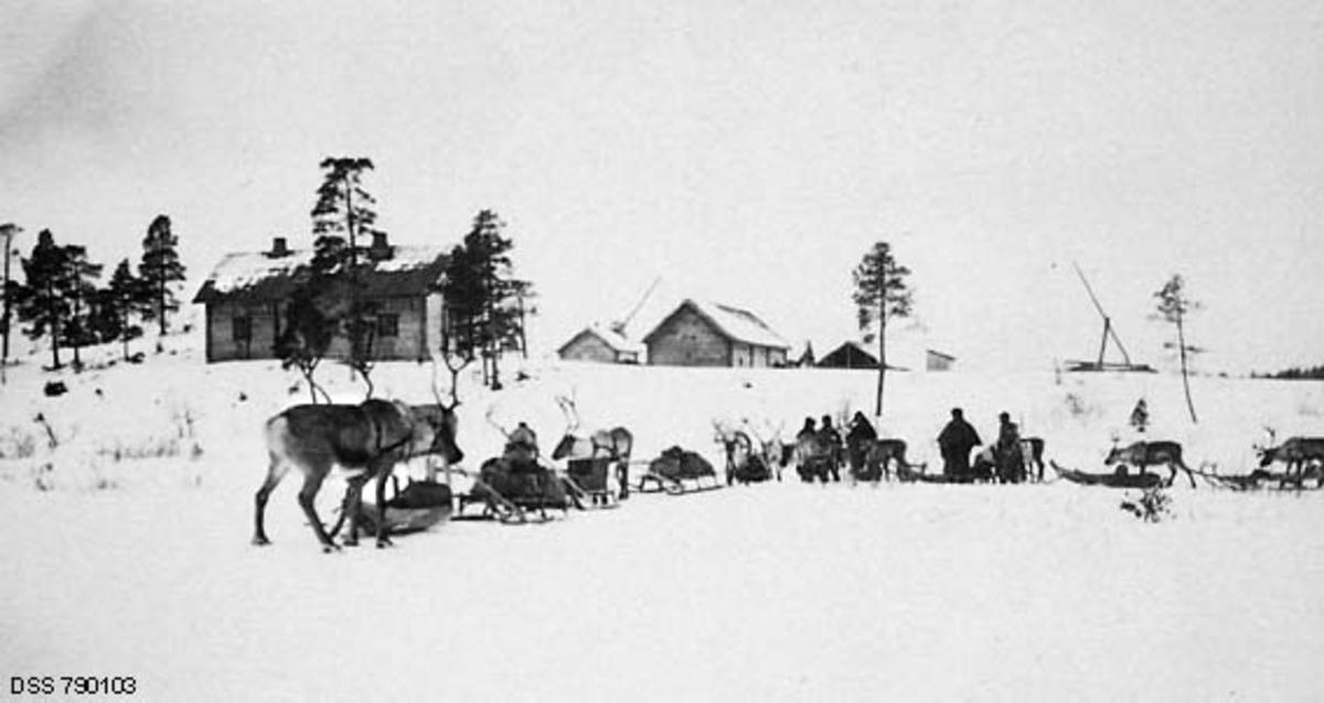 """Fra forstlig befaring i norsk-finske grensetrakter i Pasvik i Finnmark i mars 1923.  Med på denne befaringa var den norske skogdirektøren (som har tatt fotografiet), skoginspektøren """"i det Nordlandske"""" samt de skogfunksjonærene som forvaltet statens utmarksinteresser i denne regionen.  Her ser vi reisefølget, som denne dagen besto av 10-11 reinsdyr med pulker og sleder samt seks mann.  Menneskene og trekkdyra er samlet på ei snødekt flate i forgrunnen.  På bakkekammen i bakgrunnen lå et gardstun med laftete bygninger, et våningshus til venstre, økonomibygninger sentralt i bildet og ei brønmnvippe til høyre.  Dette bruket var også finsk grensestasjon, og det gikk under navnet Höyhenjärvi."""