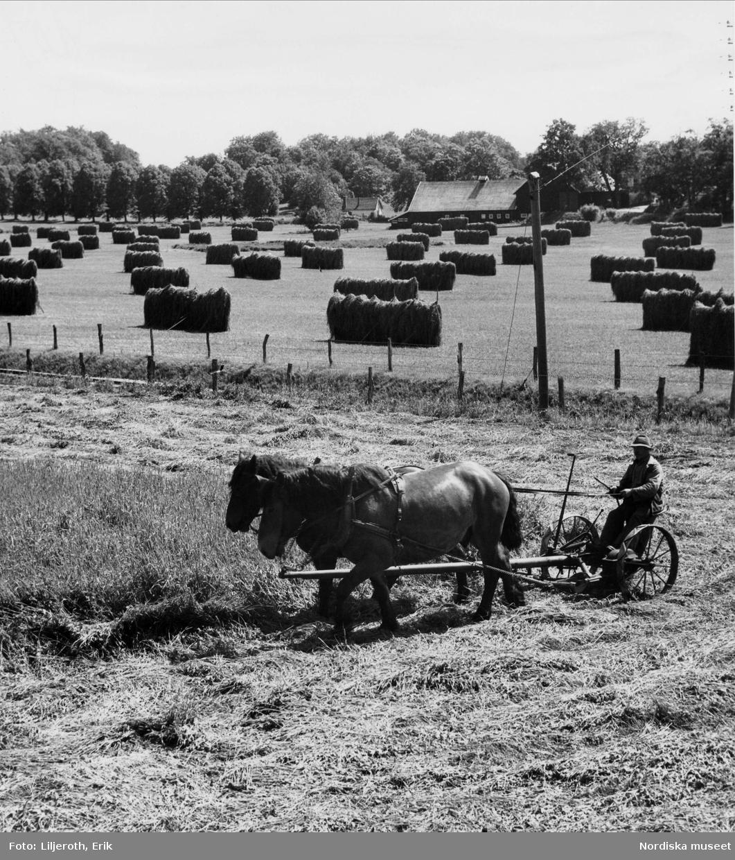 En bonde och två hästar på ett jordbruk i Nättrabyådalen