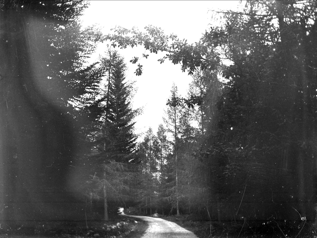 Väg i barrskog, Eds socken, Uppland 1914