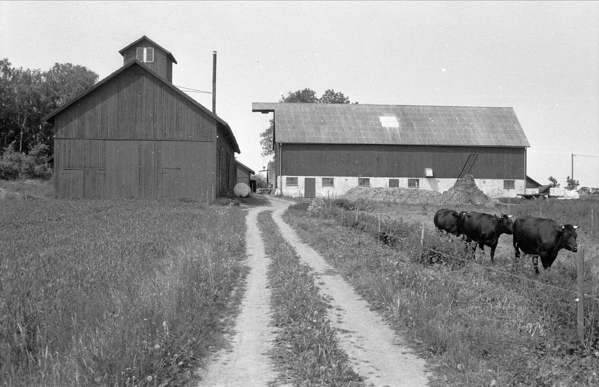 Loge och ladugård, Lundbacken, Sundbro, Bälinge socken, Uppland 1983
