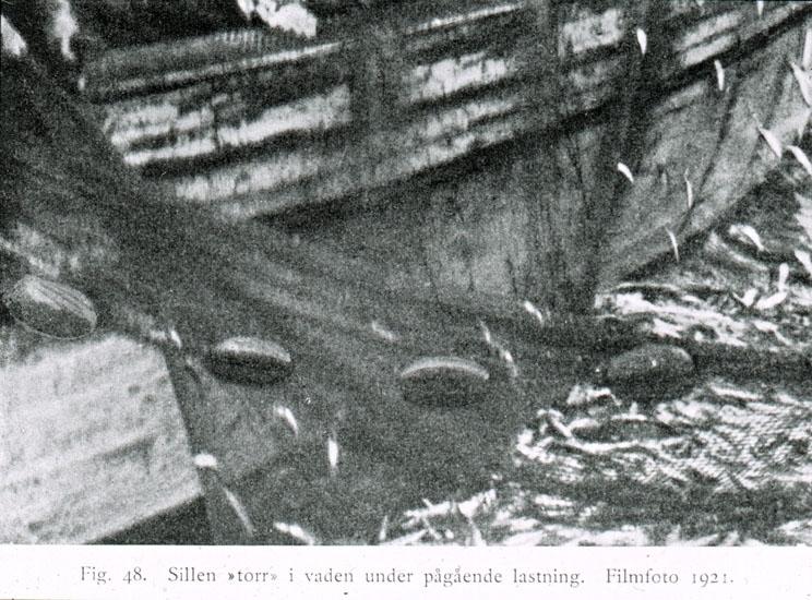 """Text på skioptikonplåten: """"Fig. 18. Sillen """"torr"""" i vaden under pågående lastning.  Filmfoto 1921."""""""
