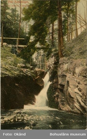 """Tryckt text på vykortets framsida: """"Från Kasenskogen."""""""