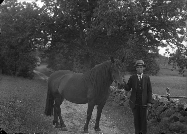 """Enligt fotografens anteckningar: """"1938, 38. Hästen...""""."""